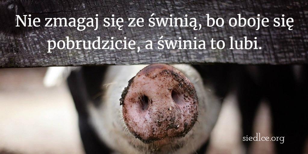 Nie zmagaj się ze świnią